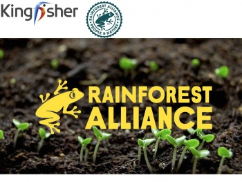 Kingfisher rejoint l'association Rainforest Alliance en tant que membre fondateur de l'initiative Forest Allies